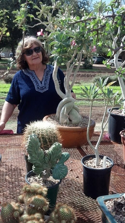 We caught Jeanne peeking around a beautiful Desert Rose at Succulentia.